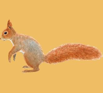 Squirrel ##STADE## - coat 41