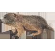 Marmot ##STADE## - coat 69
