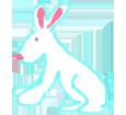 European Rabbit ##STADE## - coat 1340000009